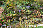 Pond and shrubs in natural-style summer garden