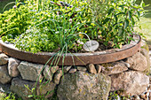 Herb garden planted in old cartwheel