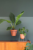 Houseplants in plant stands handmade from lampshades