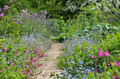 A path between flower beds with light carnations, forget-me-nots, and meadow rue