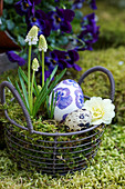 Basket with white grape hyacinth, primrose blossom and Easter eggs as an Easter basket