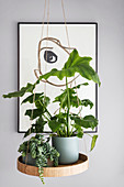 Floating plant table