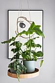 Schwebendes Pflanzenplateau