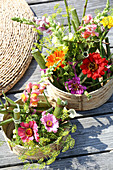 Arrangements of knotweed, snapdragons and zinnias in baskets