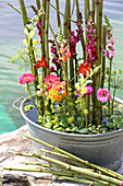 Arrangement of knotweed, snapdragons and zinnias in zinc tub