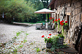 Flowering geraniums outside rustic stone house