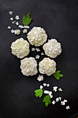Viburnum flowers arranged on dark surface