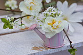 Narcissus 'Bridal crown' and hairy rockcress flowers in miniature watering can