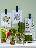 Water plants in glass jars and bottles with botanical pictures hanging on the wall