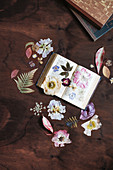 Pressed flowers and leaves in open book