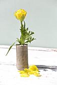 Yellow double tulip in handmade concrete vases