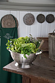 Freshly picked lettuce and herbs in colander in kitchen
