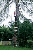 Boy climbing up rope ladder on larch tree