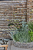 Shallow wicker basket planted with herbs