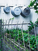 Old zinc tubs hung on fence in small vegetable patch