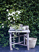Vase of white roses on rustic garden table