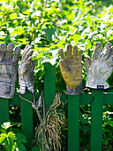 Work gloves drying on tops of fence slats