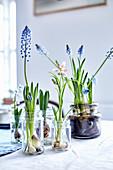 Zwiebelblumen in Schraubgläsern als Frühlingsdeko auf dem Tisch