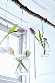 Tulips in jars on wires hung from branch in window