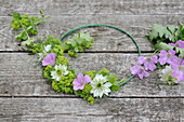 Tie a summer wreath of lady's mantle, cranesbill and maiden in the countryside on a wire ring