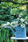 Bouquet of apple branches in a watering can