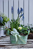 Grape hyacinths, violas, primulas and hand-sewn heart in planter