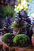 Pinecones decoration with moss