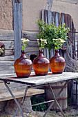 Bunches of feverfew in demijohns used as vases