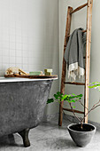 Wooden ladder used as towel rail and potted fig tree next to grey bathtub