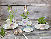 Old spoons used as plant labels and herbs planted in teacups