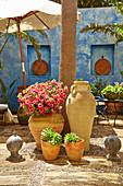 Petunias and succulents in clay pots in Majorcan courtyard