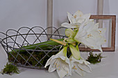 White amaryllis and moss in basket