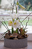 Arrangement of amaryllis, twigs and autumn leaves in zinc tub
