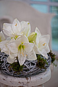 White amaryllis flowers in wreath of twigs and moss
