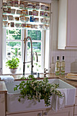 Flowering branches in sink below window and collection of vintage cups
