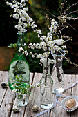 Twigs of blackthorn blossom in tiny bottles