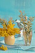 Mimosenzweige in Vasen