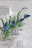 Blue grape hyacinths and forget-me-nots in three glass vases