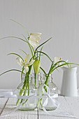 White snake's head fritillaries in glass bottles tied together with ribbon
