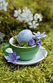 Blue quail egg, liverwort and moss in espresso cup