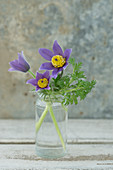 Posy of pasque flower