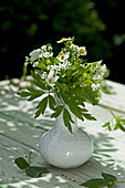 Posy of wild strawberry and sweet woodruff flowers in vase
