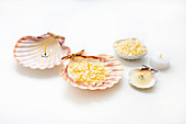 Steps of making tealights in scallop shells