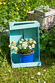 Blue-painted wooden crate used as plant stand in garden