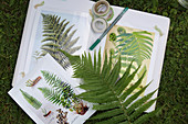Botanical illustrations of fern leaves