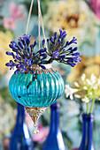 Blue agapanthus in Oriental, suspended vase