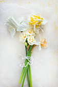 Bouquet of white narcissi ((Narzissus 'Katie Heath', Narcissus 'Pure white', Narcissus 'Bridal crown', Narcissus 'Double Pam')