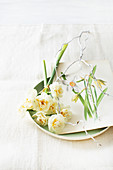 Narcissus flowers and old illustration of narcissus on metal plate