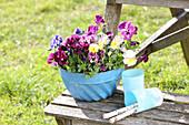 Blaue Guglhupfform bepflanzt mit Hornveilchen und Stiefmütterchen