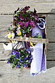 View down onto basket of violas, scissors and gift wrap